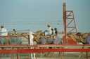 2001 qatar 050