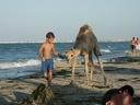 2003 tunisie 033