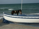 2003 tunisie 046