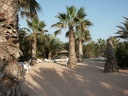 2003 tunisie