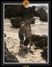 2006 Guadeloupe K 014