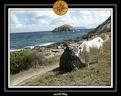 2006 Guadeloupe K 023