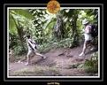 2006 Guadeloupe K 040