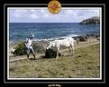 2006 Guadeloupe 005