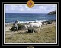 2006 Guadeloupe 006