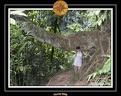 2006 Guadeloupe 014