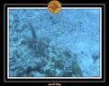 2006 Guadeloupe 055