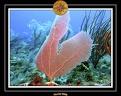 2006 Guadeloupe 056