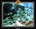 2006 Guadeloupe 059
