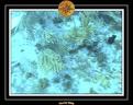 2006 Guadeloupe 060