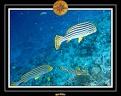 2007 Maldives 041