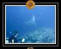 Maldives 07 Mantas 03