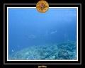 Maldives 07 Mantas 06