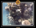 2009 EL QOSEIR Plongee PMT 001
