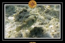 2009 EL QOSEIR Plongee PMT 026