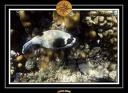 2009 EL QOSEIR Plongee PMT 030