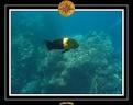 2009 EL QOSEIR Plongee PMT 032