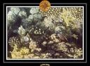 2009 EL QOSEIR Plongee PMT 033