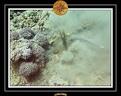 2009 EL QOSEIR Plongee 023