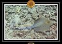 2009 EL QOSEIR Plongee 025