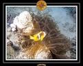 2009 EL QOSEIR Plongee 045