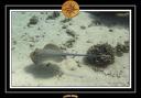 2009 EL QOSEIR Plongee 056