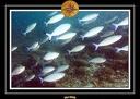 2009 Embudu PL 031