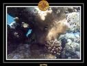 2009 Embudu PMT 013