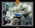 2009 Embudu PMT 028