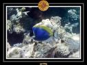 2009 Embudu PMT 031
