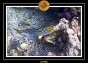 2009 Embudu PMT 059