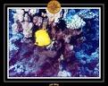 CPO 2010 El Qoseir 53