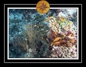 2010 Maldives 049