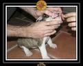 20 Nov 2005 Yoda 003