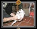 20 Nov 2005 Yoda 005