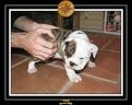 20 Nov 2005 Yoda 009
