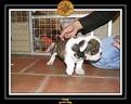 20 Nov 2005 Yoda 010