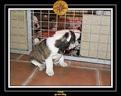 20 Nov 2005 Yoda 013