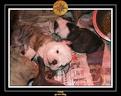 20 Nov 2005 Yoda 017