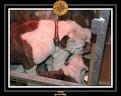 20 Nov 2005 Yoda 034