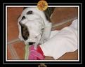 20 Nov 2005 Yoda 041