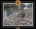 Yoda 2006 Ballade a La Motte 047