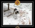 Yoda 2006 Decouverte de la neige 012
