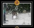 Yoda 2006 Decouverte de la neige 018
