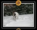 Yoda 2006 Decouverte de la neige 023