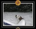 Yoda 2006 Decouverte de la neige 030
