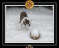 Yoda 2006 Decouverte de la neige 031