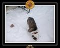 Yoda 2006 Decouverte de la neige 034